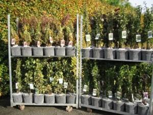 hedging packs